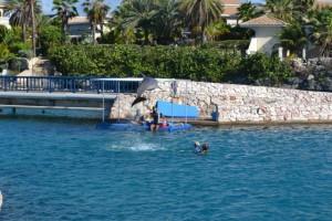 therapiedag2-dolfijnspringt