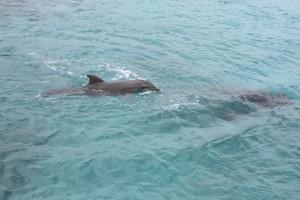 2013-6 Curacao 127