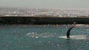 Spr. Dolfijn