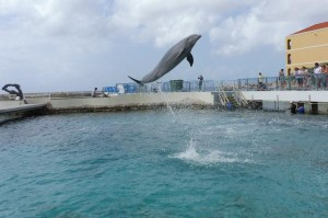Dolfijn in actie tijdens 1 van de shows die elke dag in het Sea Aquarium gehouden worden