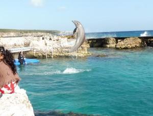 en nog een Dolfijn die een fraaie sprong maakt.