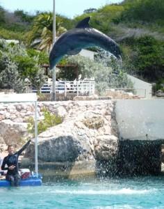 Dolfijnen kunnen echt hoog springen
