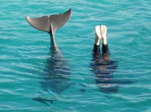 's middags bij dolijnenshow. Dolfijn imiteert trainster met op de kop staan