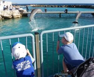 springende dolfijnen krijg je nooit genoeg van