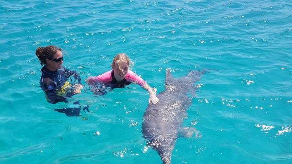 Wat is zo'n dolfijn groot van zo dichtbij!!!!!