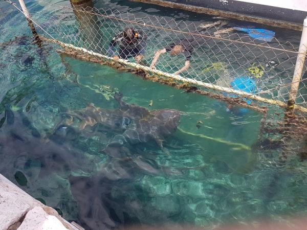 Grote haaien bekijken met alleen een plaatje glas er tussen.....spannend!