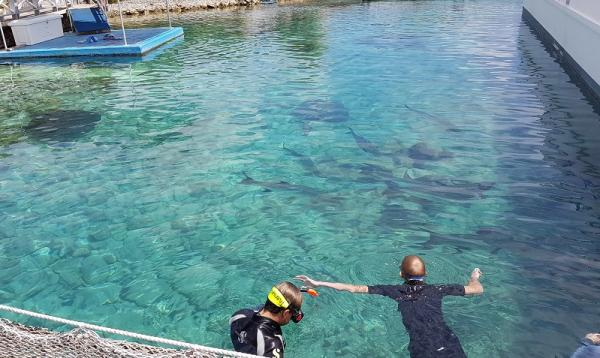 Grote vissen en roggen van wel 2 meter waar je gewoon doorheen zwemt. Echt bijzonder!